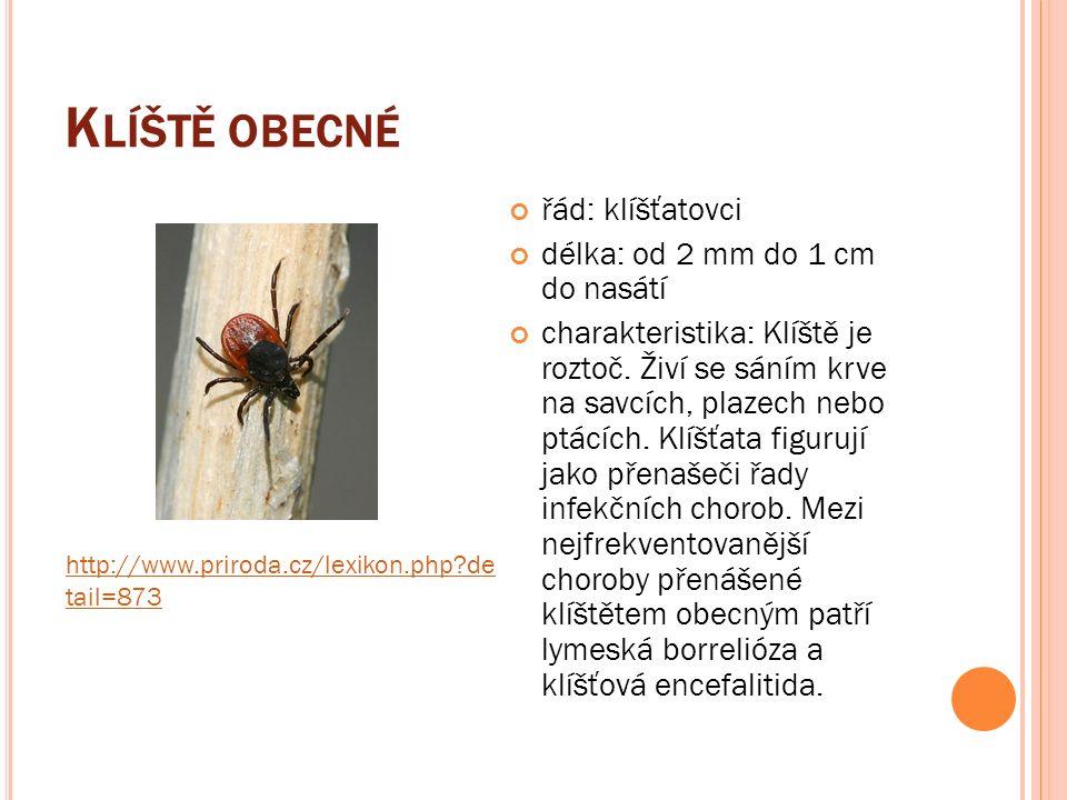 K LÍŠTĚ OBECNÉ řád: klíšťatovci délka: od 2 mm do 1 cm do nasátí charakteristika: Klíště je roztoč.
