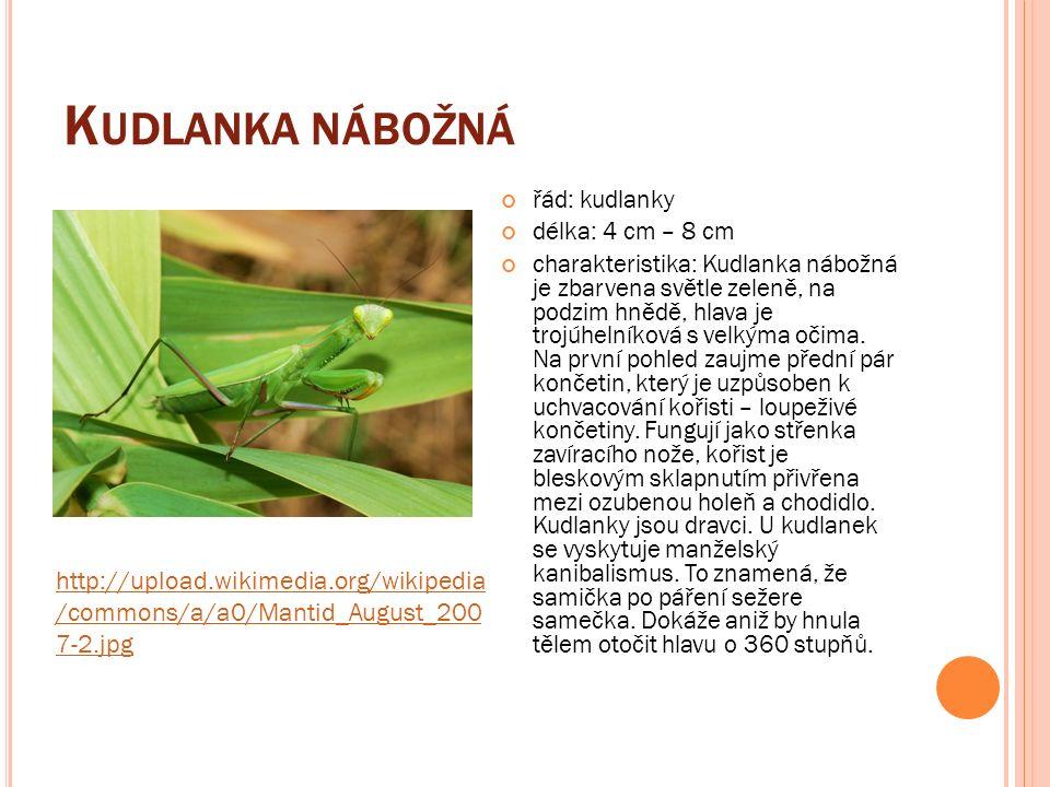 M OUCHA DOMÁCÍ třída: hmyz délka: 6 – 12 mm charakteristika: Moucha domácí je často považována za škůdce, který může přenášet vážné nemoci.