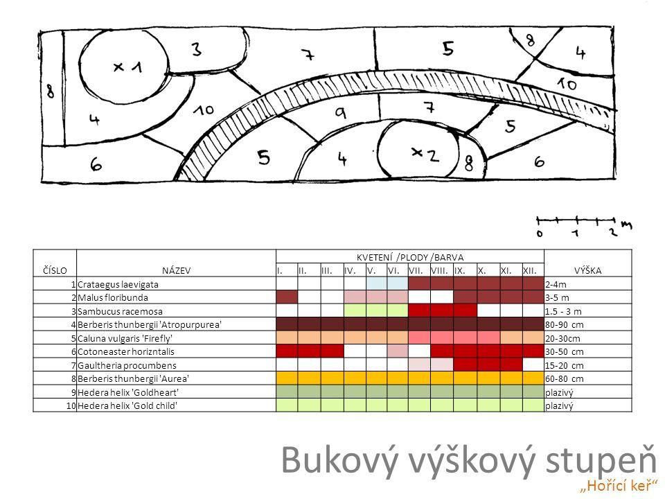 Bukový výškový stupeň ČÍSLONÁZEV KVETENÍ /PLODY /BARVA VÝŠKA I.II.III.IV.V.VI.VII.VIII.IX.X.XI.XII.