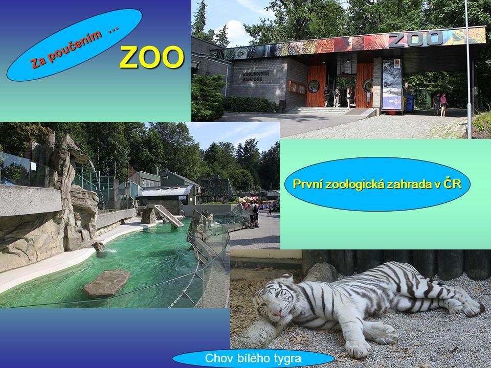 ZOO Za poučením … První zoologická zahrada v Č R Chov bílého tygra