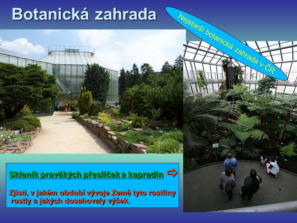 Botanická zahrada Nejstarší botanická zahrada v ČR Skleník pravěkých přesliček a kapradin  Zjisti, v jakém období vývoje Země tyto rostliny rostly a jakých dosahovaly výšek.