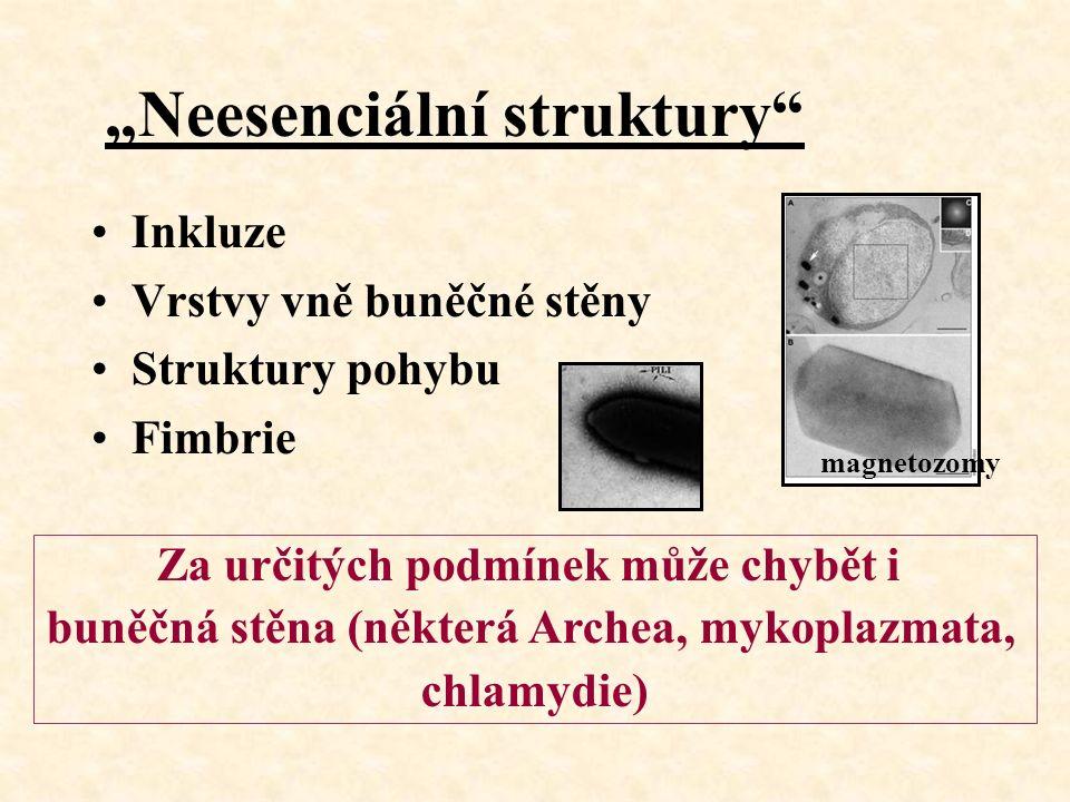 """""""Neesenciální struktury Inkluze Vrstvy vně buněčné stěny Struktury pohybu Fimbrie magnetozomy Za určitých podmínek může chybět i buněčná stěna (některá Archea, mykoplazmata, chlamydie)"""