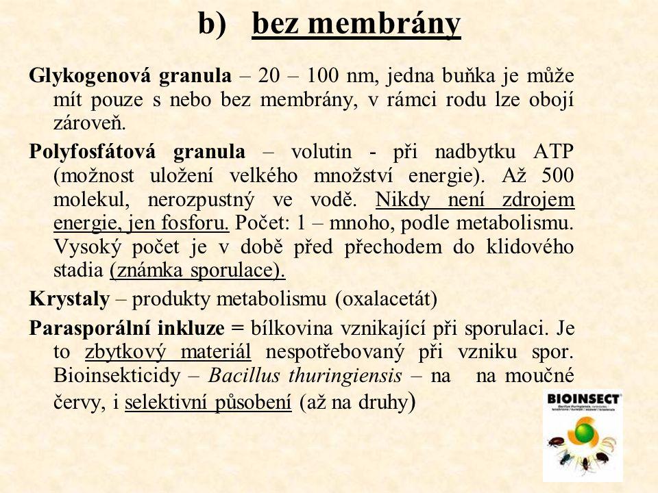 b) bez membrány Glykogenová granula – 20 – 100 nm, jedna buňka je může mít pouze s nebo bez membrány, v rámci rodu lze obojí zároveň.