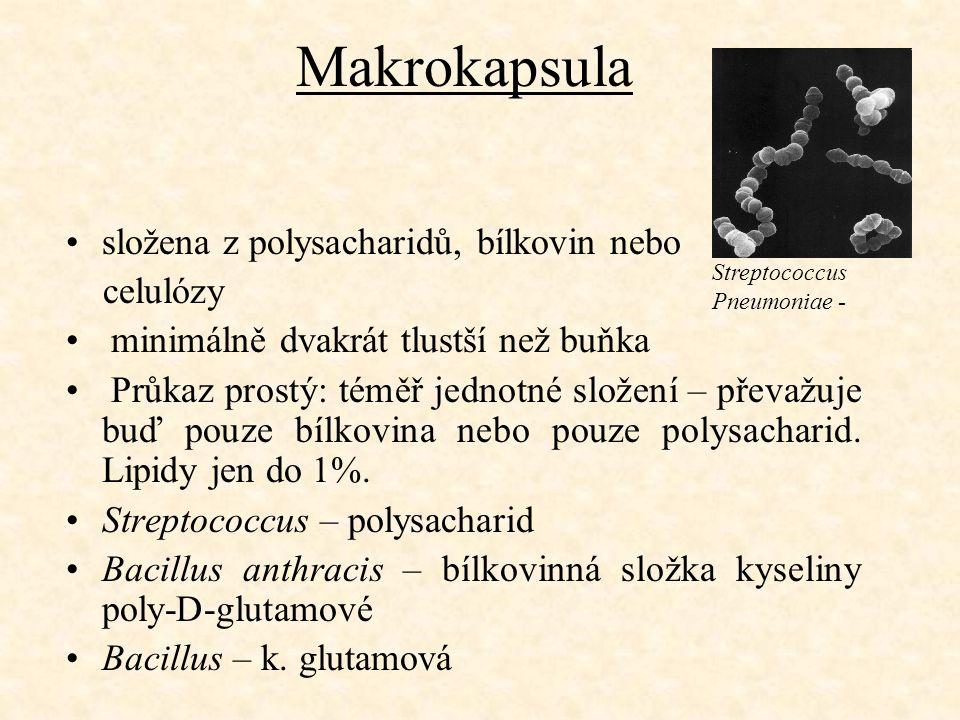Makrokapsula složena z polysacharidů, bílkovin nebo celulózy minimálně dvakrát tlustší než buňka Průkaz prostý: téměř jednotné složení – převažuje buď pouze bílkovina nebo pouze polysacharid.