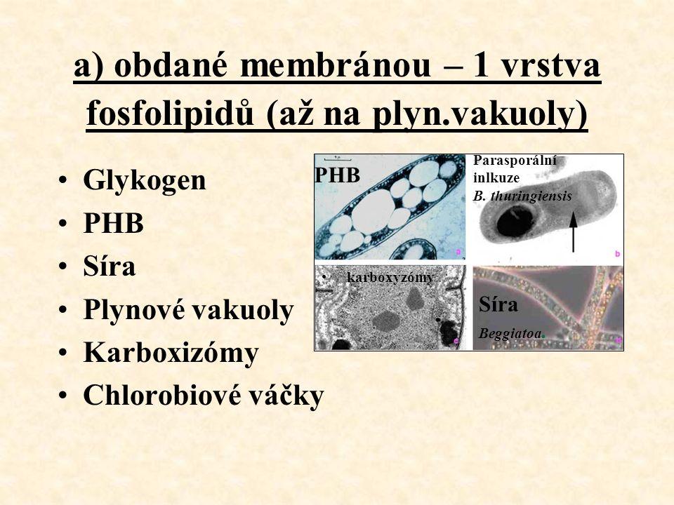 a) obdané membránou – 1 vrstva fosfolipidů (až na plyn.vakuoly) Glykogen PHB Síra Plynové vakuoly Karboxizómy Chlorobiové váčky Parasporální inlkuze B.