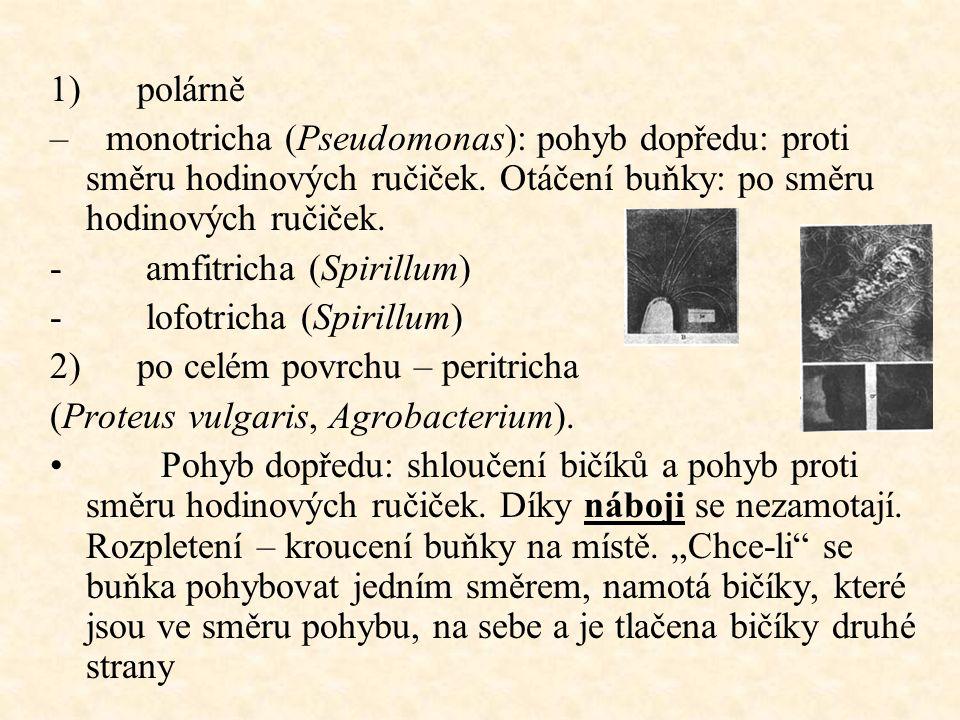 1) polárně – monotricha (Pseudomonas): pohyb dopředu: proti směru hodinových ručiček.