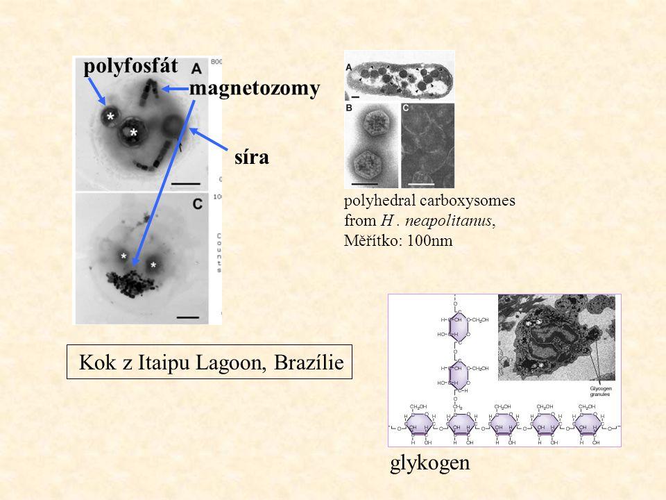stavba: 3, 4 nebo 5 vláken stočených do spirály pilin - rodově i druhově specifický, lineární sekvence proteinových podjednotek rozměry: kratší než bičík, nejdelší je maximum podélné osy buňky, Ø2-8 nm, délka 0,1 – několik nm, 3-5 molekul na celém povrchu či jen na určité části buňky