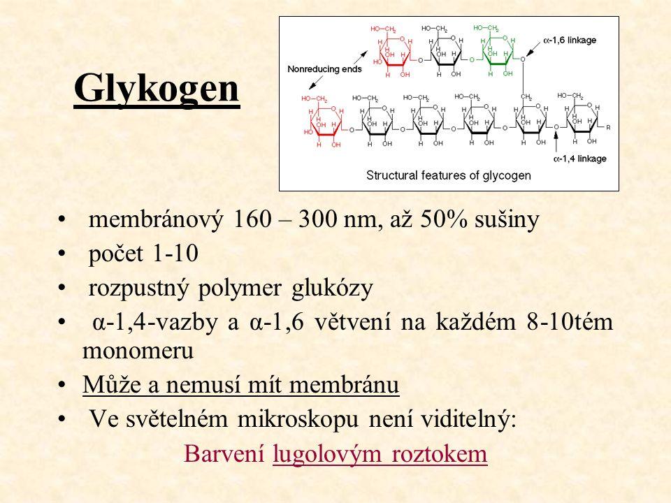 Glykogen membránový 160 – 300 nm, až 50% sušiny počet 1-10 rozpustný polymer glukózy α-1,4-vazby a α-1,6 větvení na každém 8-10tém monomeru Může a nemusí mít membránu Ve světelném mikroskopu není viditelný: Barvení lugolovým roztokem
