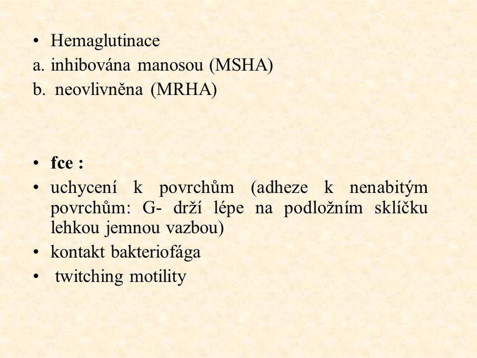 Hemaglutinace a.inhibována manosou (MSHA) b.