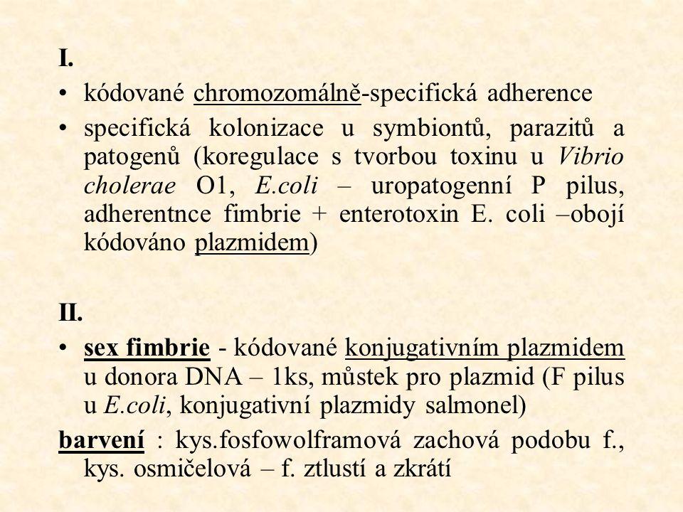 I. kódované chromozomálně-specifická adherence specifická kolonizace u symbiontů, parazitů a patogenů (koregulace s tvorbou toxinu u Vibrio cholerae O