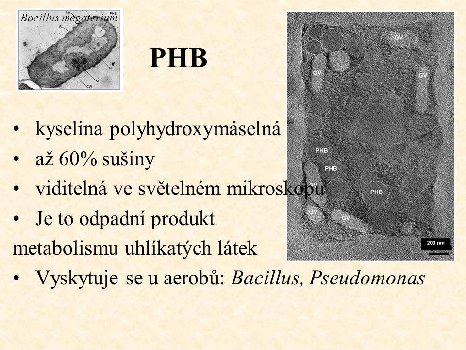 PHB Bacillus megaterium kyselina polyhydroxymáselná až 60% sušiny viditelná ve světelném mikroskopu Je to odpadní produkt metabolismu uhlíkatých látek Vyskytuje se u aerobů: Bacillus, Pseudomonas