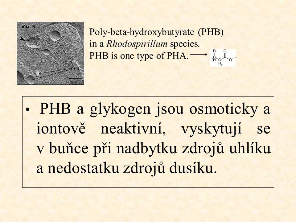 Síra zdroj energie pro chemolitotrofní sirné bakterie zdroj elektronů v procesu fotosyntézy u fototrofních sirných bakterií – zelených a purpurových (tyto přijímají energii transformací slunečního záření) amorfní Granula elementární síry, Beggiatoa Temné pole, 800x