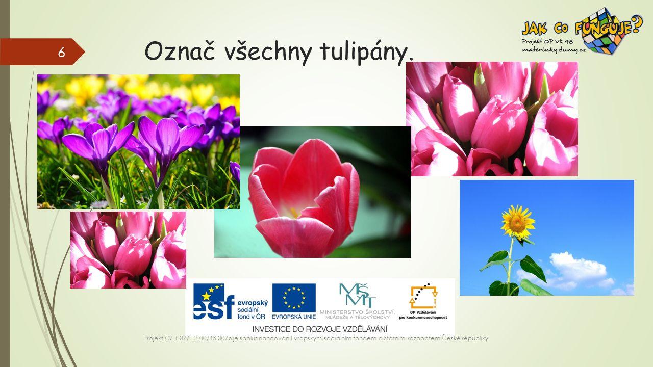 Označ všechny tulipány.