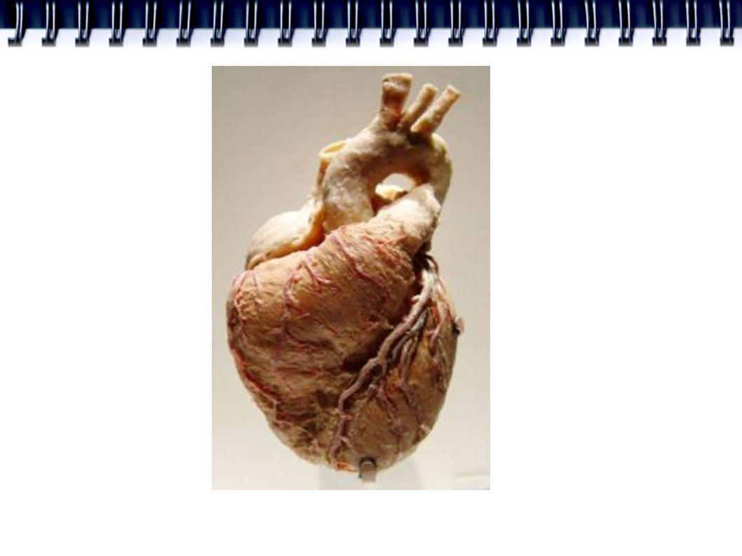SPOTŘEBA O2 = PRŮTOK x A-V DIFERENCE ● Odpor koronárních cév se může zmenšit až o ¼ = koronární rezerva ● Průtok stoupne 4x ● Při námaze možnost pokrytí 4násobné zvýšení nároků srdce na O2