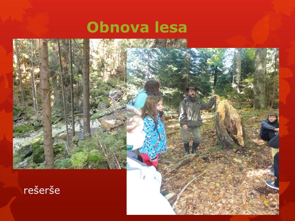 Obnova lesa rešerše