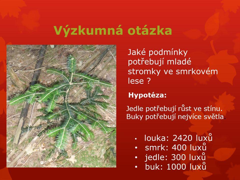 Výzkumná otázka Jaké podmínky potřebují mladé stromky ve smrkovém lese ? Jedle potřebují růst ve stínu. Buky potřebují nejvíce světla. louka: 2420 lux