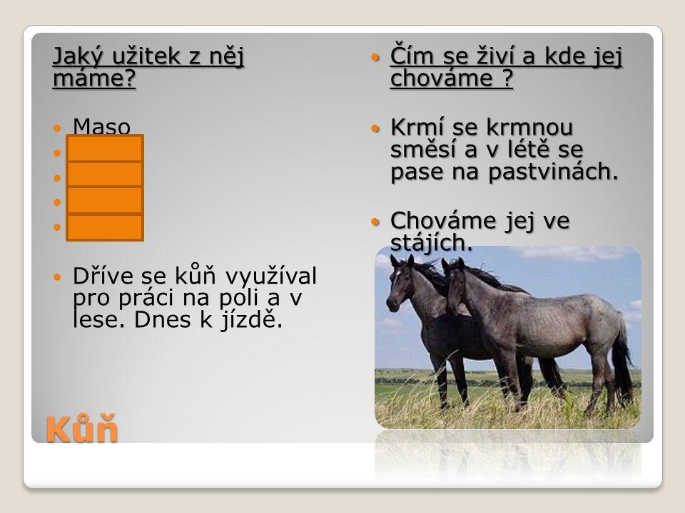 Kůň Jaký užitek z něj máme? Maso Mléko Kůži Vejce Vlnu Dříve se kůň využíval pro práci na poli a v lese. Dnes k jízdě. Čím se živí a kde jej chováme ?