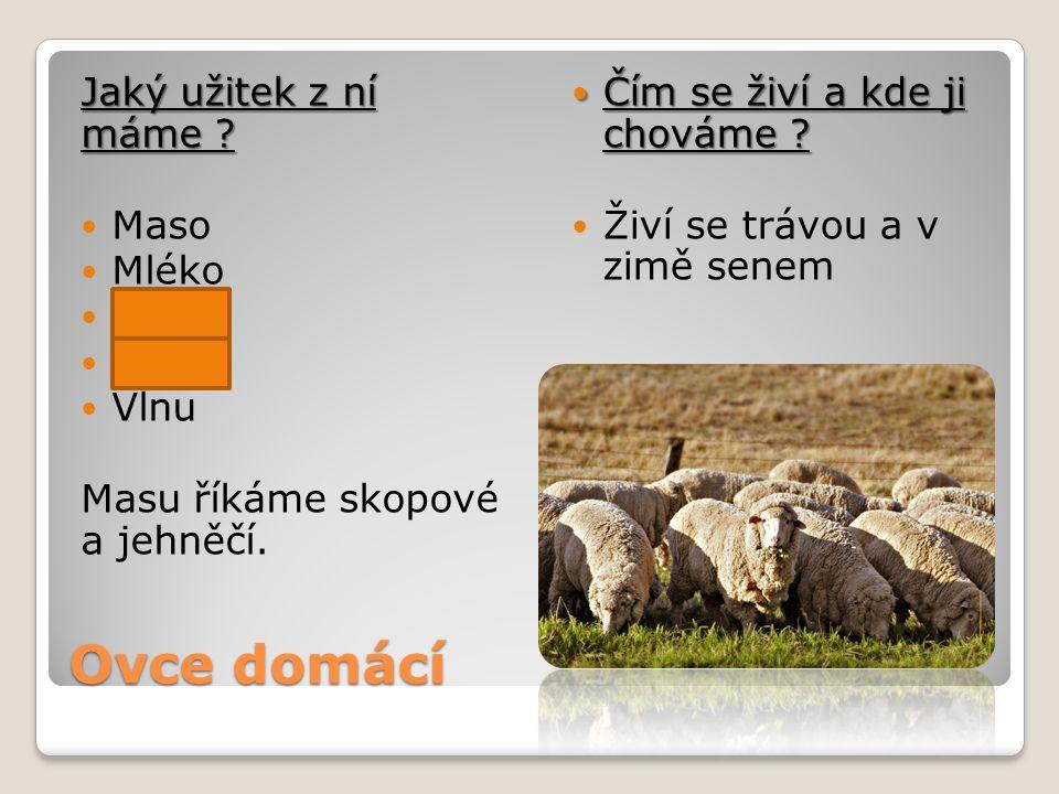 Ovce domácí Jaký užitek z ní máme ? Maso Mléko Kůži Vejce Vlnu Masu říkáme skopové a jehněčí. Čím se živí a kde ji chováme ? Čím se živí a kde ji chov