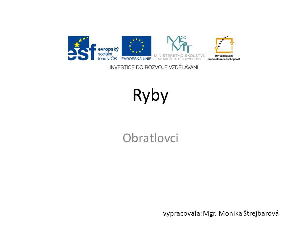 Ryby Obratlovci vypracovala: Mgr. Monika Štrejbarová