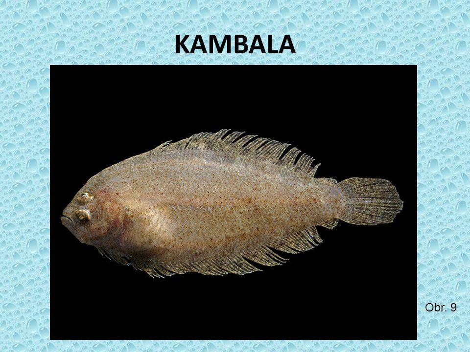 KAMBALA Obr. 9