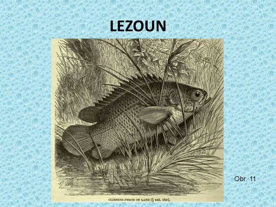 LEZOUN Obr. 11