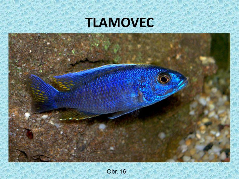 TLAMOVEC Obr. 16