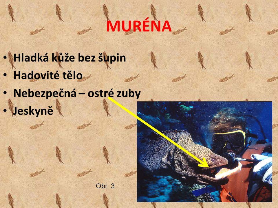 MURÉNA Hladká kůže bez šupin Hadovité tělo Nebezpečná – ostré zuby Jeskyně Obr. 3