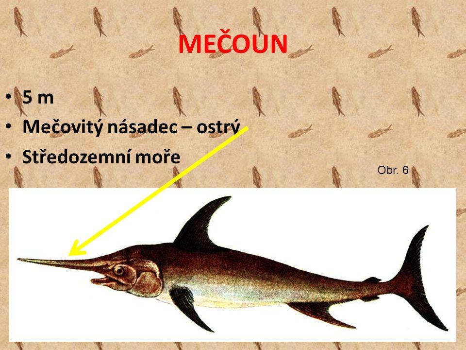 MEČOUN 5 m Mečovitý násadec – ostrý Středozemní moře Obr. 6