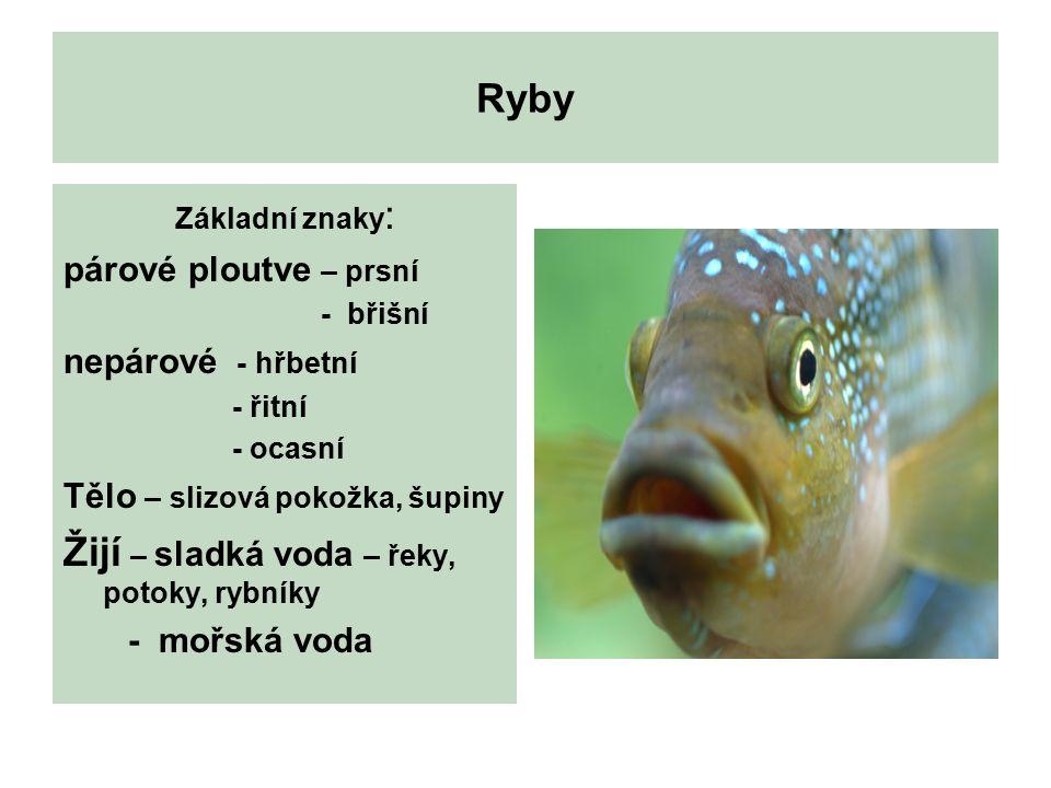 Ryby Základní znaky : párové ploutve – prsní - břišní nepárové - hřbetní - řitní - ocasní Tělo – slizová pokožka, šupiny Žijí – sladká voda – řeky, potoky, rybníky - mořská voda