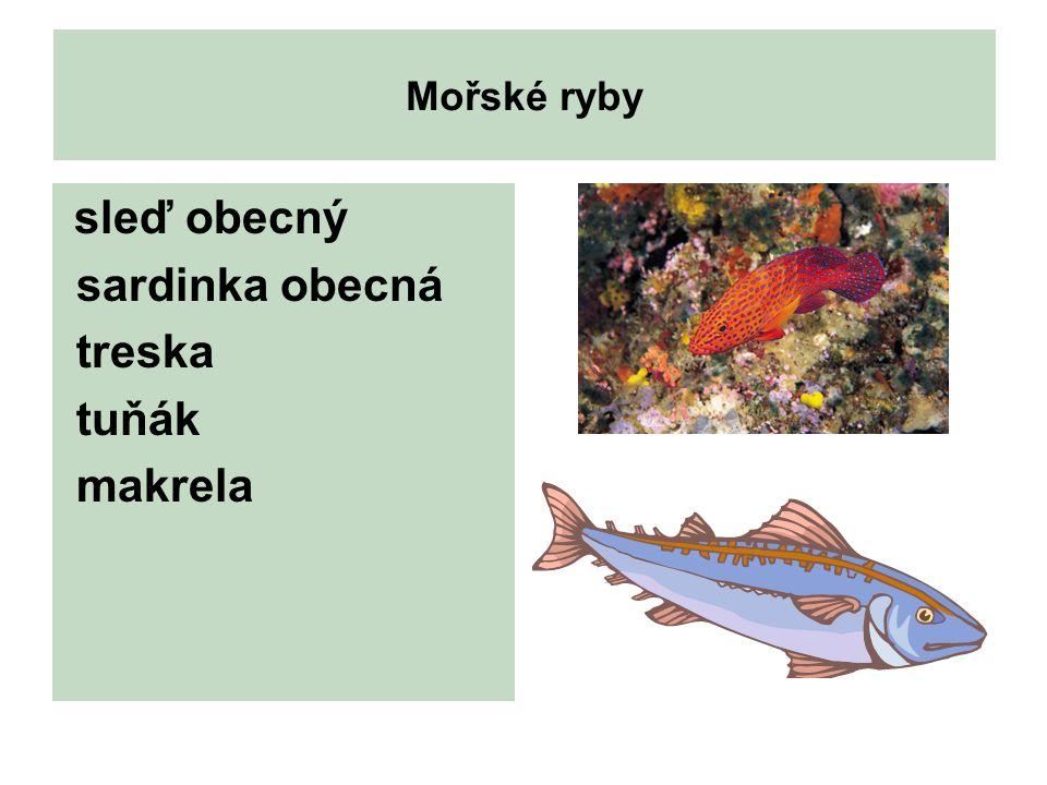 Mořské ryby sleď obecný sardinka obecná treska tuňák makrela