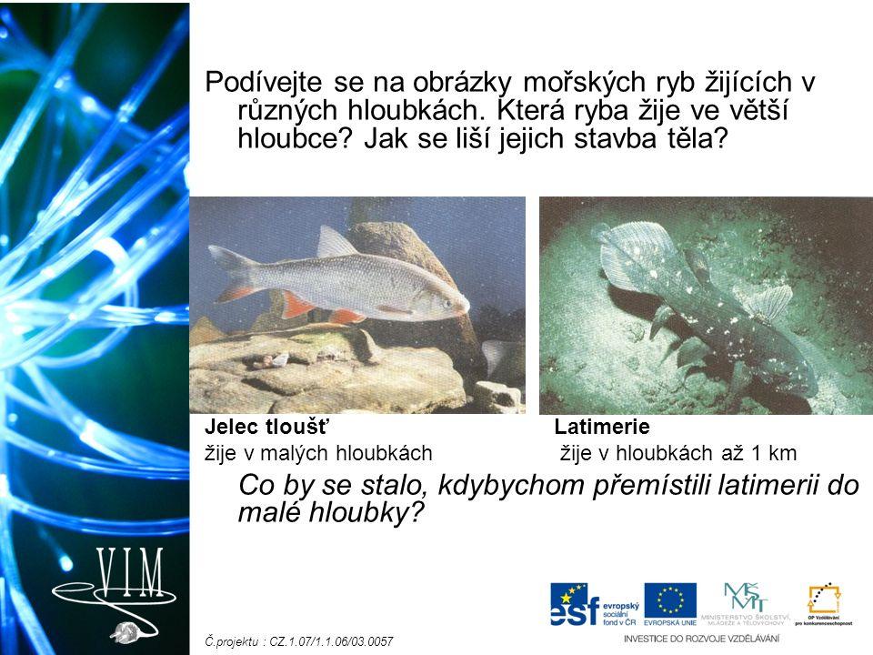 Č.projektu : CZ.1.07/1.1.06/03.0057 Podívejte se na obrázky mořských ryb žijících v různých hloubkách.