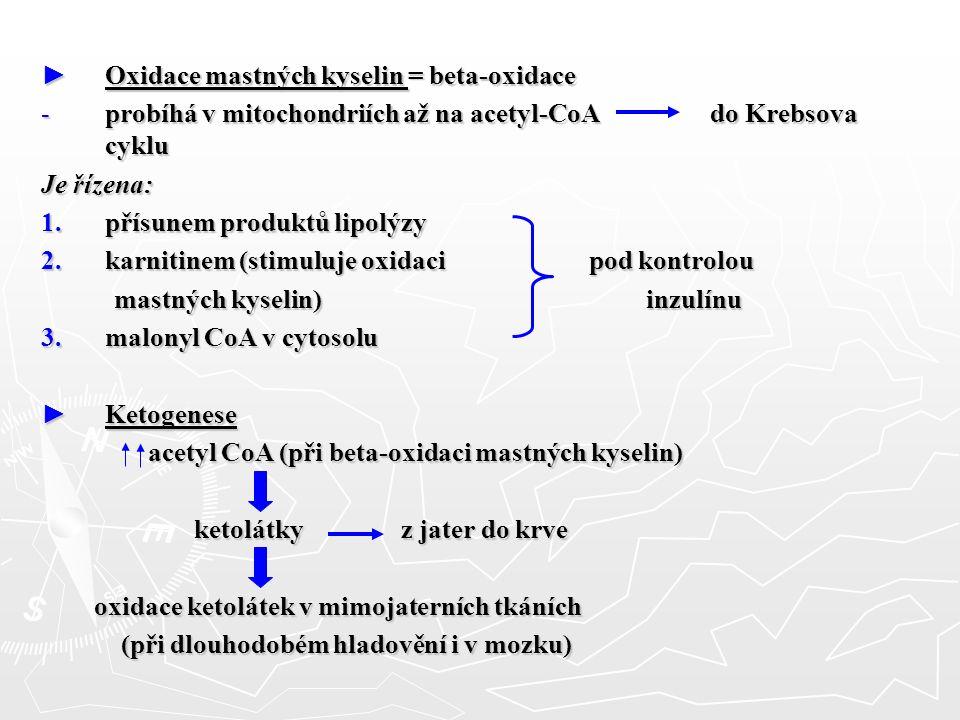 ► Oxidace mastných kyselin = beta-oxidace -probíhá v mitochondriích až na acetyl-CoA do Krebsova cyklu Je řízena: 1.přísunem produktů lipolýzy 2.karni