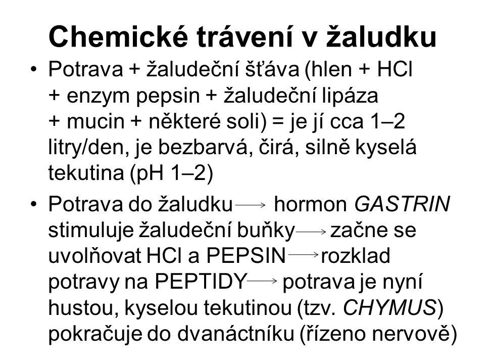 Chemické trávení v žaludku Potrava + žaludeční šťáva (hlen + HCl + enzym pepsin + žaludeční lipáza + mucin + některé soli) = je jí cca 1–2 litry/den, je bezbarvá, čirá, silně kyselá tekutina (pH 1–2) Potrava do žaludku hormon GASTRIN stimuluje žaludeční buňky začne se uvolňovat HCl a PEPSIN rozklad potravy na PEPTIDY potrava je nyní hustou, kyselou tekutinou (tzv.