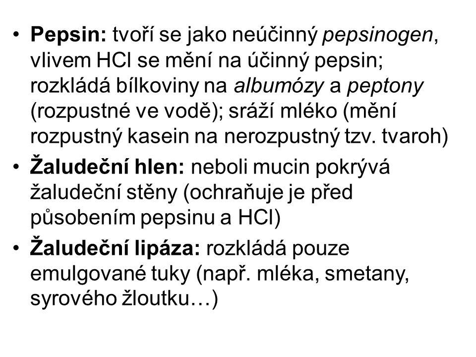 Pepsin: tvoří se jako neúčinný pepsinogen, vlivem HCl se mění na účinný pepsin; rozkládá bílkoviny na albumózy a peptony (rozpustné ve vodě); sráží mléko (mění rozpustný kasein na nerozpustný tzv.