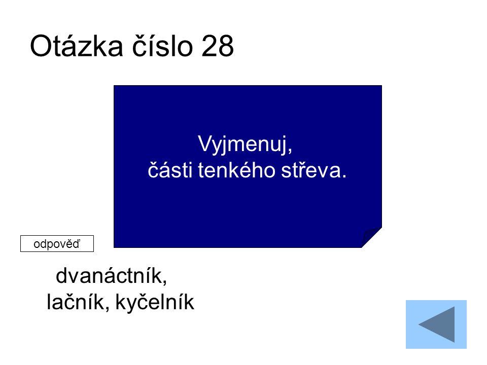 Otázka číslo 28 dvanáctník, lačník, kyčelník Vyjmenuj, části tenkého střeva. odpověď