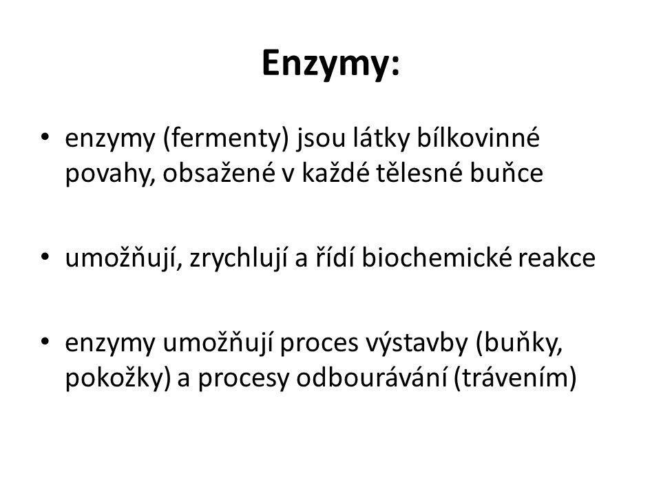 Enzymy: enzymy (fermenty) jsou látky bílkovinné povahy, obsažené v každé tělesné buňce umožňují, zrychlují a řídí biochemické reakce enzymy umožňují proces výstavby (buňky, pokožky) a procesy odbourávání (trávením)