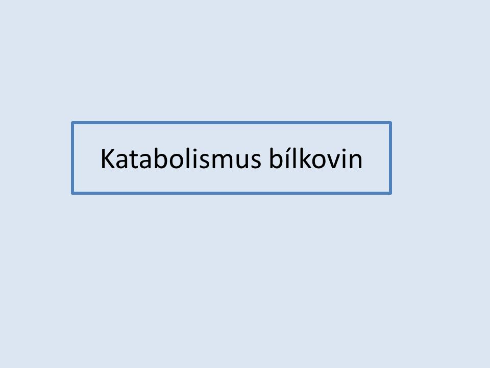 Katabolismus bílkovin
