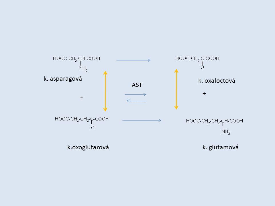 AST + + k. asparagová k. oxaloctová k.oxoglutarovák. glutamová