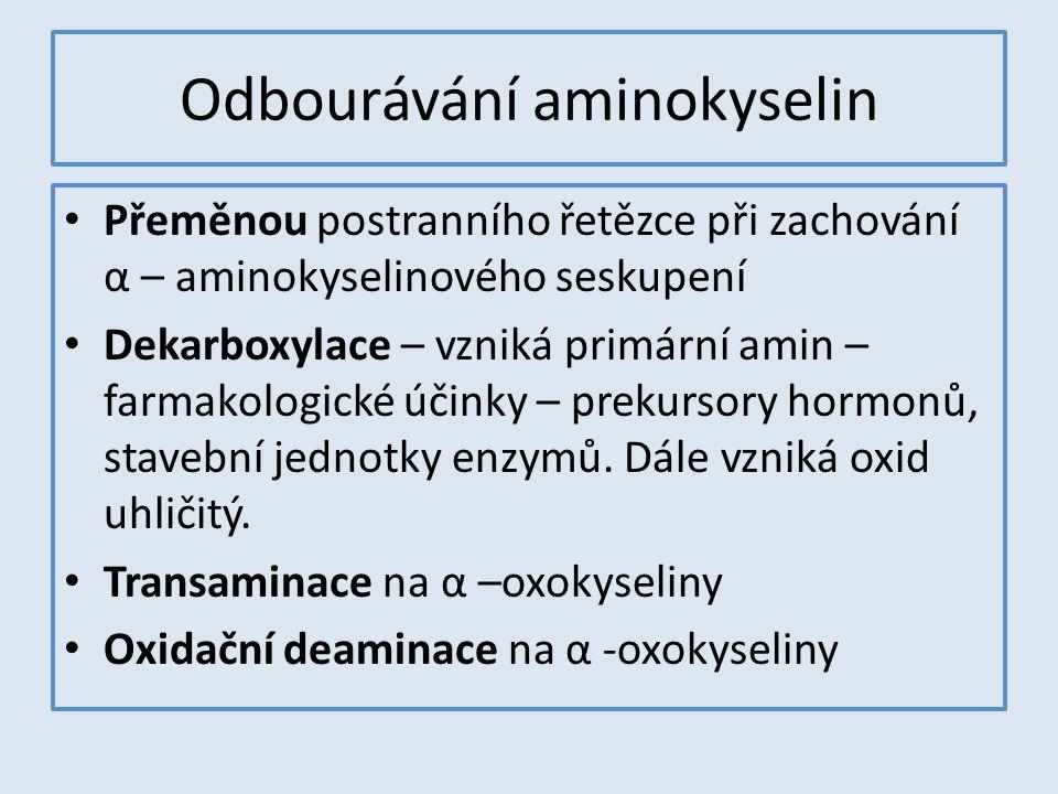 Odbourávání aminokyselin Přeměnou postranního řetězce při zachování α – aminokyselinového seskupení Dekarboxylace – vzniká primární amin – farmakologi