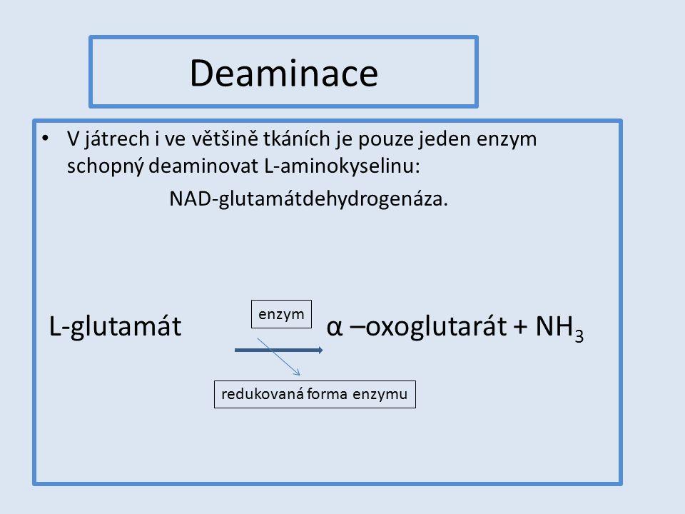 Deaminace V játrech i ve většině tkáních je pouze jeden enzym schopný deaminovat L-aminokyselinu: NAD-glutamátdehydrogenáza. L-glutamát α –oxoglutarát