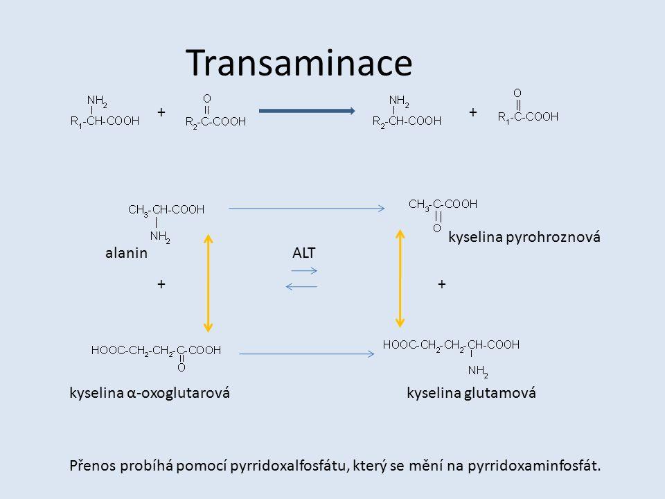 Transaminace ++ ++ alanin kyselina pyrohroznová kyselina α-oxoglutarovákyselina glutamová ALT Přenos probíhá pomocí pyrridoxalfosfátu, který se mění n
