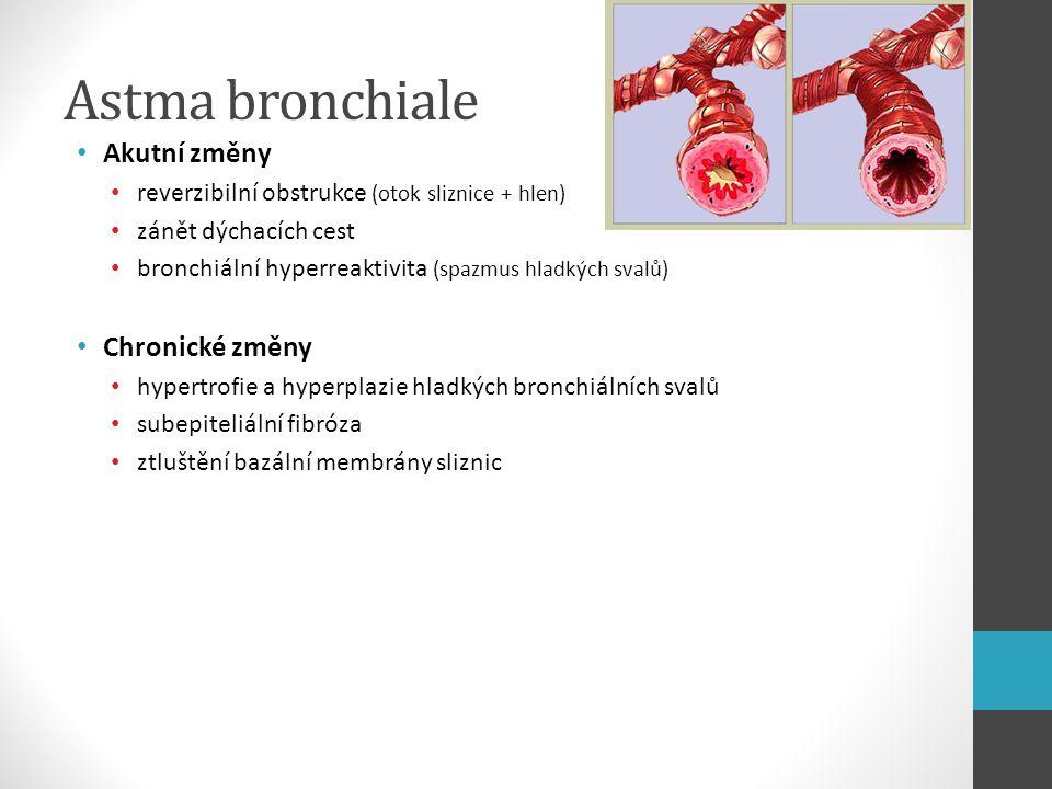 Astma bronchiale Akutní změny reverzibilní obstrukce (otok sliznice + hlen) zánět dýchacích cest bronchiální hyperreaktivita (spazmus hladkých svalů)