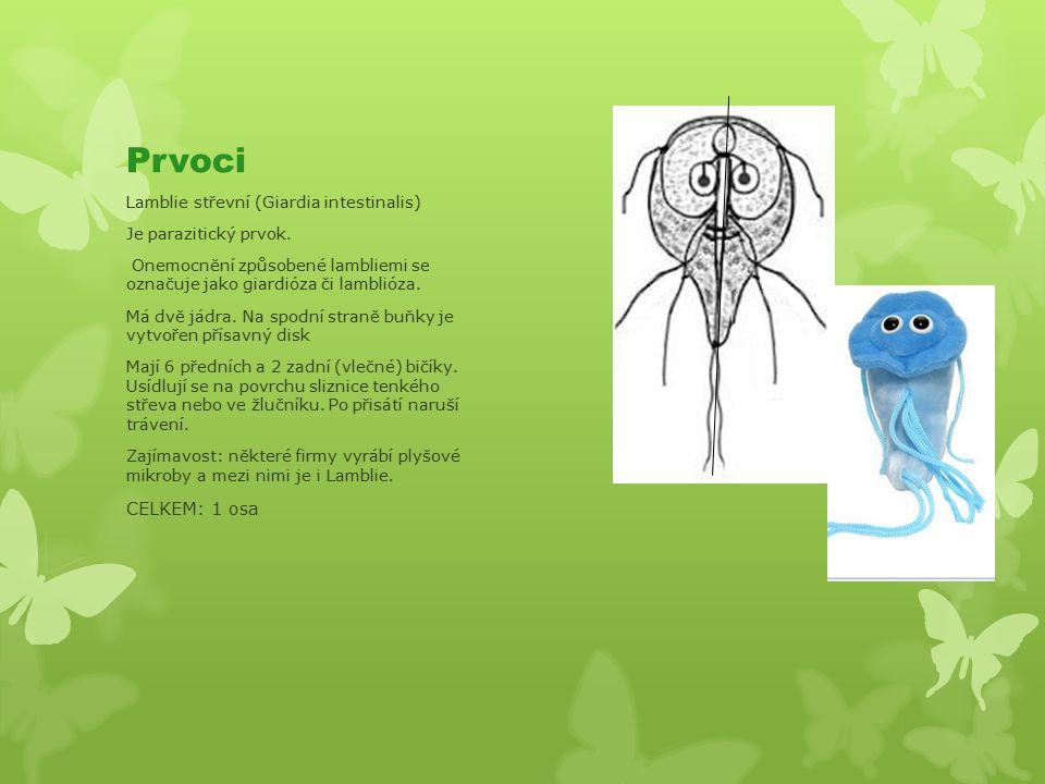 Prvoci Lamblie střevní (Giardia intestinalis) Je parazitický prvok.