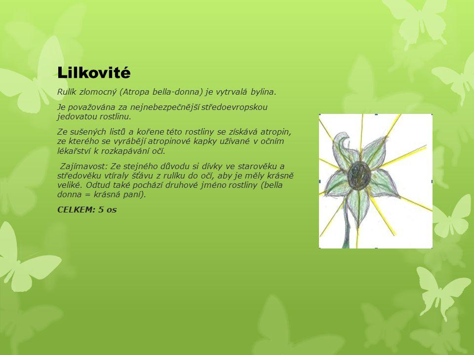 Lilkovité Rulík zlomocný (Atropa bella-donna) je vytrvalá bylina.