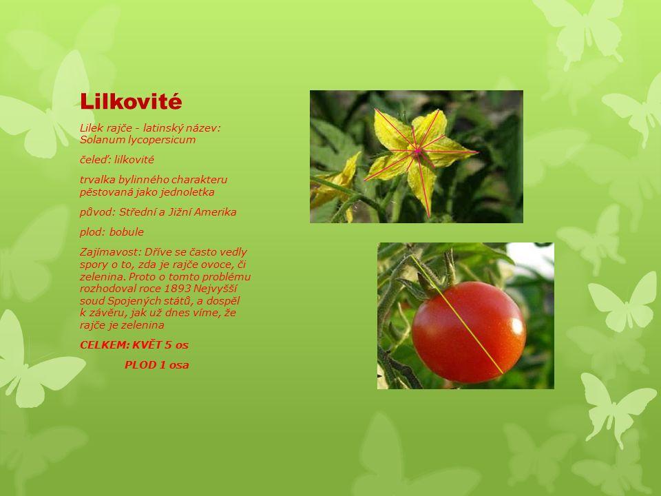 Lilkovité Lilek rajče - latinský název: Solanum lycopersicum čeleď: lilkovité trvalka bylinného charakteru pěstovaná jako jednoletka původ: Střední a Jižní Amerika plod: bobule Zajímavost: Dříve se často vedly spory o to, zda je rajče ovoce, či zelenina.