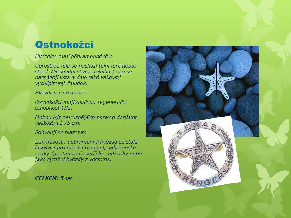 Ostnokožci Hvězdice mají pětiramenné tělo. Uprostřed těla se nachází tělní terč neboli střed.