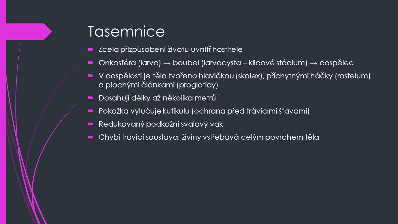 Tasemnice  Zcela přizpůsobeni životu uvnitř hostitele  Onkosféra (larva) → boubel (larvocysta – klidové stádium) → dospělec  V dospělosti je tělo tvořeno hlavičkou (skolex), příchytnými háčky (rostelum) a plochými článkami (proglotidy)  Dosahují délky až několika metrů  Pokožka vylučuje kutikulu (ochrana před trávicími šťavami)  Redukovaný podkožní svalový vak  Chybí trávicí soustava, živiny vstřebává celým povrchem těla
