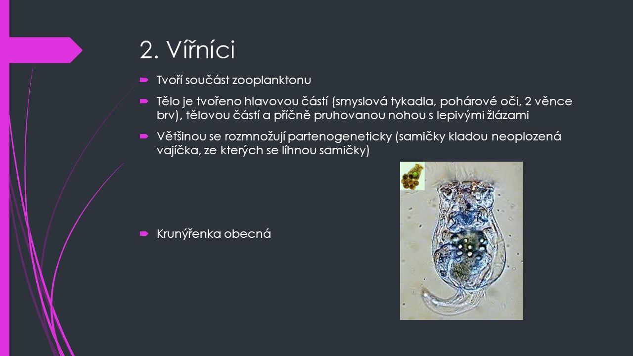 2. Vířníci  Tvoří součást zooplanktonu  Tělo je tvořeno hlavovou částí (smyslová tykadla, pohárové oči, 2 věnce brv), tělovou částí a příčně pruhova