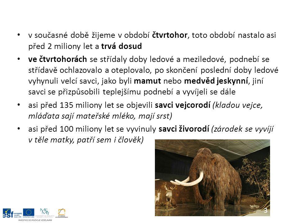 v současné době žijeme v období čtvrtohor, toto období nastalo asi před 2 miliony let a trvá dosud ve čtvrtohorách se střídaly doby ledové a meziledové, podnebí se střídavě ochlazovalo a oteplovalo, po skončení poslední doby ledové vyhynuli velcí savci, jako byli mamut nebo medvěd jeskynní, jiní savci se přizpůsobili teplejšímu podnebí a vyvíjeli se dále asi před 135 miliony let se objevili savci vejcorodí (kladou vejce, mláďata sají mateřské mléko, mají srst) asi před 100 miliony let se vyvinuly savci živorodí (zárodek se vyvíjí v těle matky, patří sem i člověk) 3