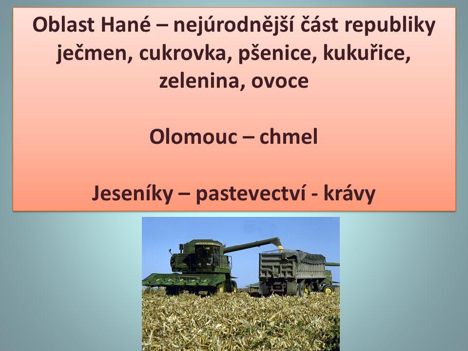 Oblast Hané – nejúrodnější část republiky ječmen, cukrovka, pšenice, kukuřice, zelenina, ovoce Olomouc – chmel Jeseníky – pastevectví - krávy Oblast H